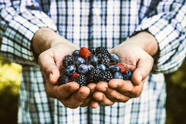 фермер органический фрукты Фермеры рук Сток-фото © mythja