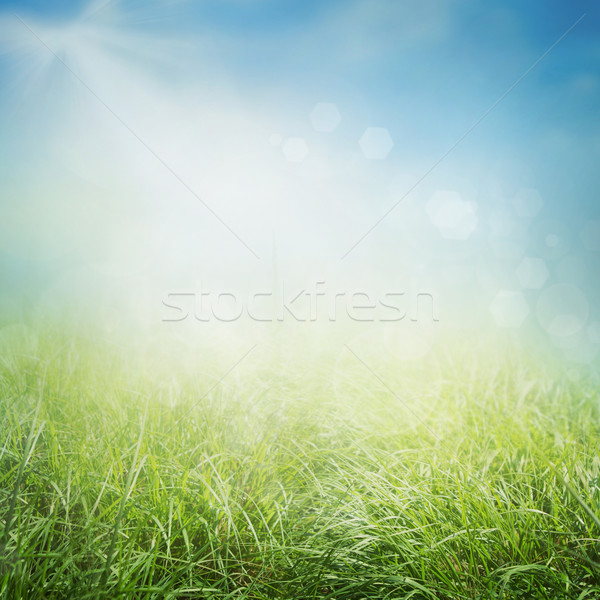 Spring background Stock photo © mythja
