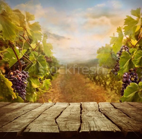 Vineyard design Stock photo © mythja