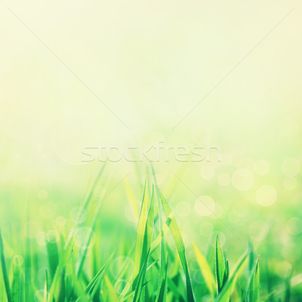 Spring or summer abstract nature background Stock photo © mythja