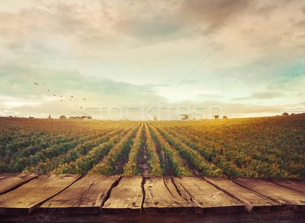 Foto stock: Vinha · outono · mesa · de · madeira · primavera · projeto · vazio