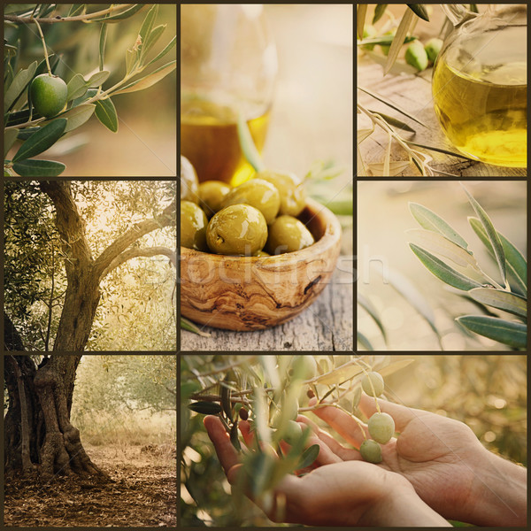 Olives collage Stock photo © mythja