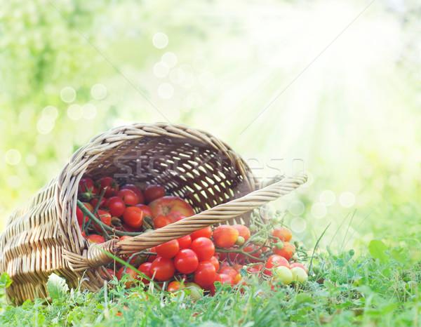Freshly harvested tomatoes Stock photo © mythja