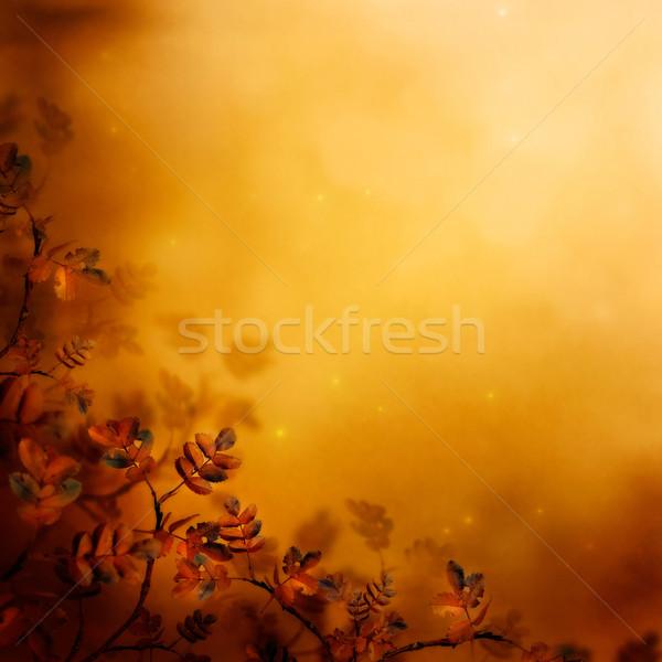 Zdjęcia stock: Jesienią · projektu · kwiatowy · pozostawia · sezon · kolory