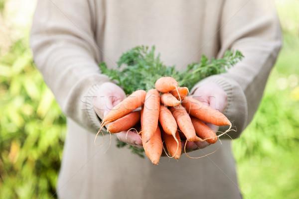 Taze havuç organik sebze sağlıklı gıda çiftçiler Stok fotoğraf © mythja