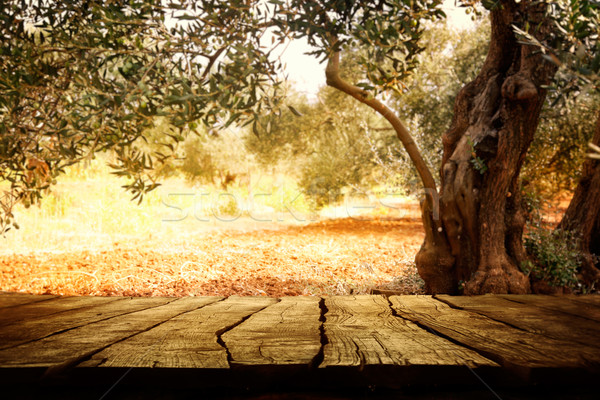 Wooden table with olive tree Stock photo © mythja