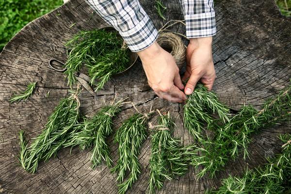 Rosmarijn kruid tuinman omhoog vers voedsel Stockfoto © mythja