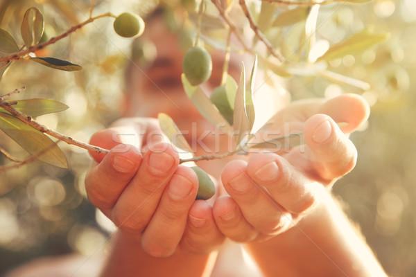 Aceitunas cosecha agricultor cosecha de oliva Foto stock © mythja