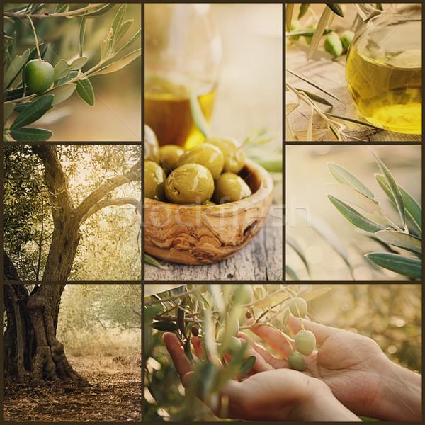 Foto stock: Aceitunas · collage · naturaleza · de · oliva · cosecha