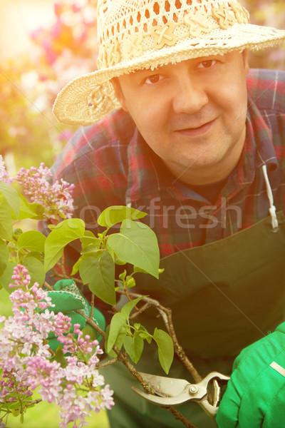 Spring garden concept Stock photo © mythja