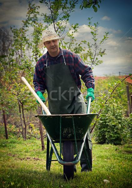 Tavasz kert férfi munka talicska természet Stock fotó © mythja