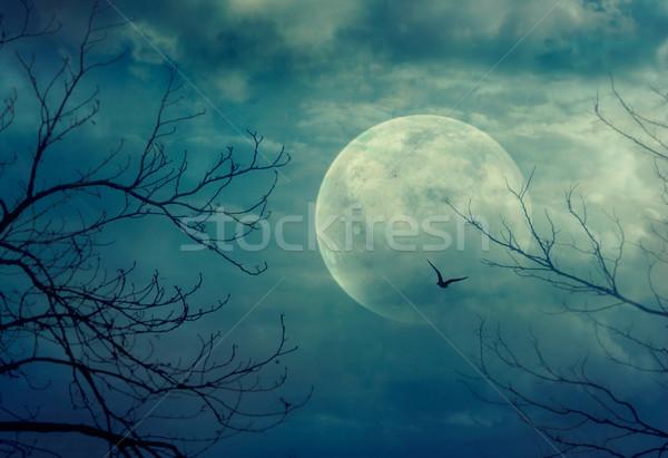 Halloween bos volle maan dode bomen Stockfoto © mythja