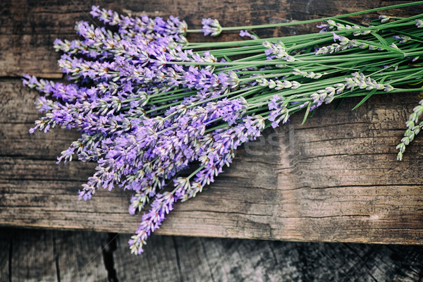 Zdjęcia stock: świeże · lawendy · lata · kwiatowy · kwiaty