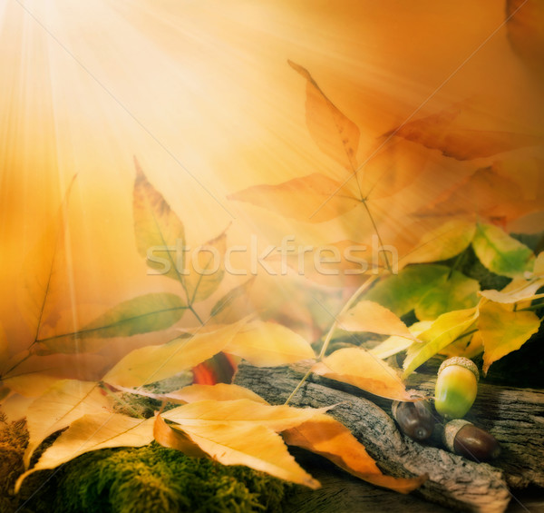 Forest background. Autumn border design with oak acorns  Stock photo © mythja