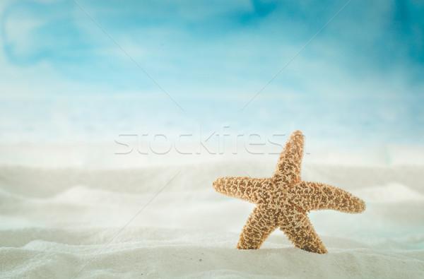 Nyár tengerpart homok kagylók tenger homokos tengerpart Stock fotó © mythja