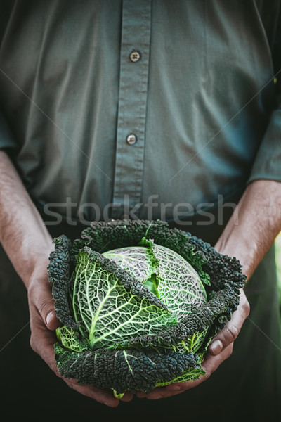 Farmer with kale Stock photo © mythja