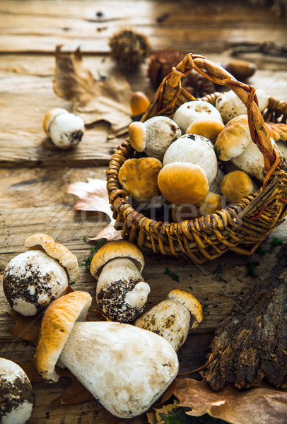 Mushrooms on wood Stock photo © mythja