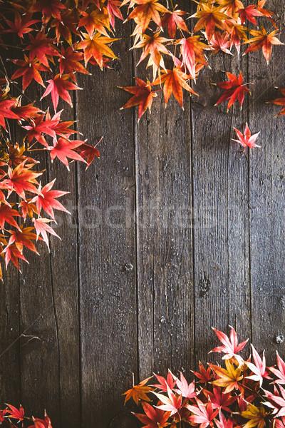 őszi levelek fa ősz piros levelek természet Stock fotó © mythja