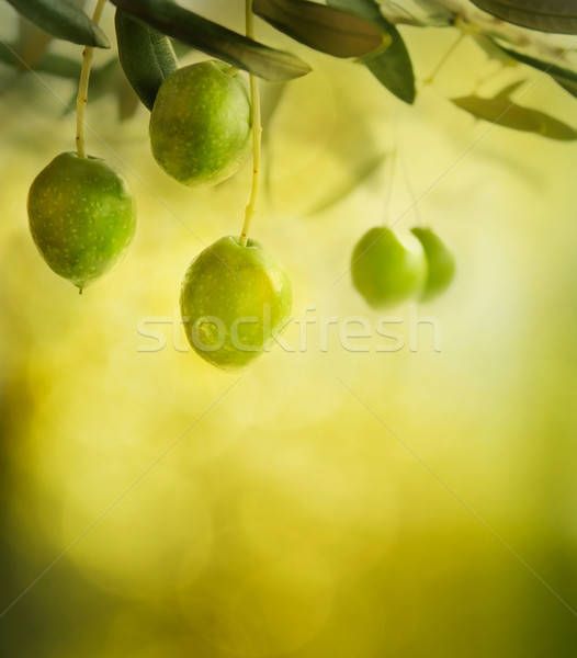 Olives design background Stock photo © mythja