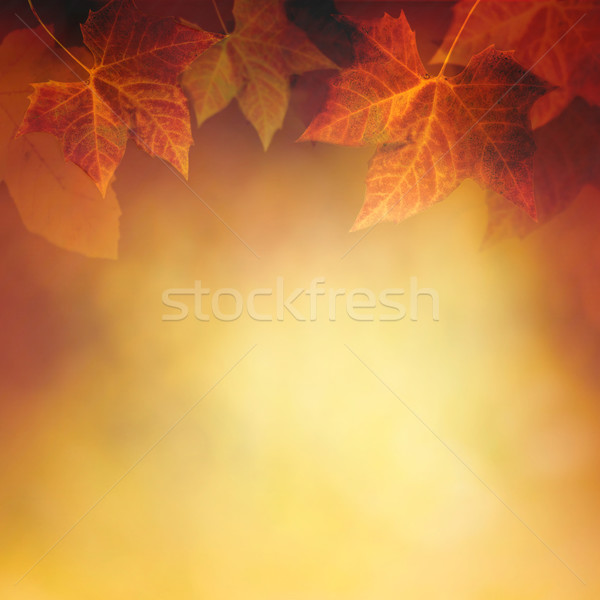 Autumn leaf Stock photo © mythja