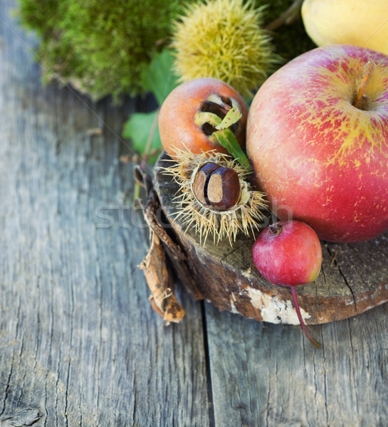 Forest fruit Stock photo © mythja