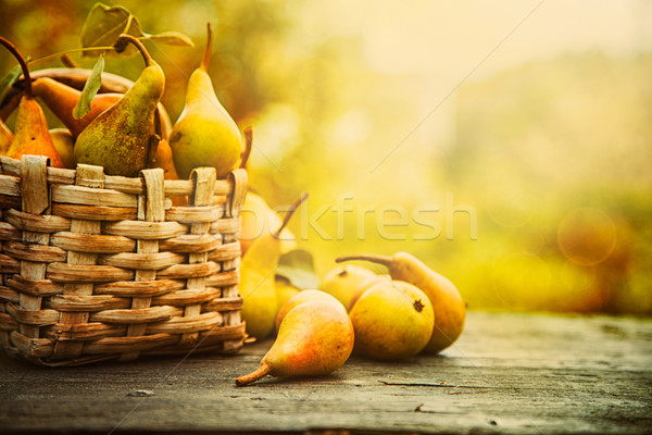 Autumn pears Stock photo © mythja