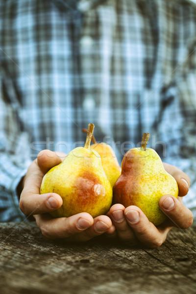 Vers peer organisch vruchten gezonde voeding boeren Stockfoto © mythja