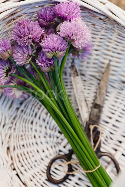Frescos cebollino flor rústico primavera verano Foto stock © mythja