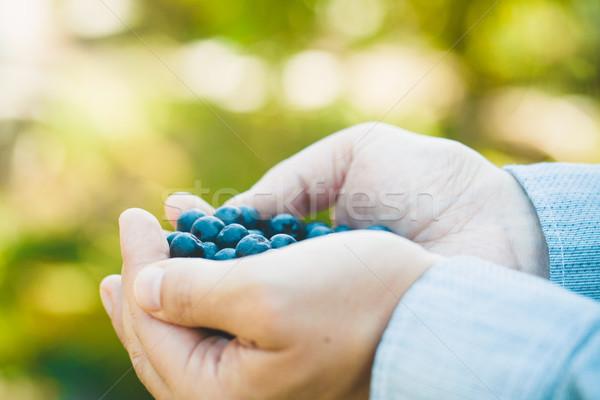 фермер черника органический фрукты Фермеры рук Сток-фото © mythja
