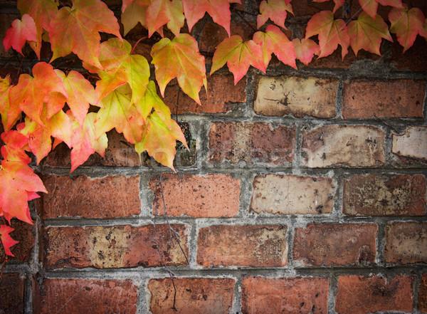 Ivy over brick wall Stock photo © mythja