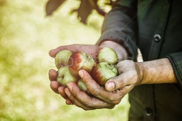 農家 リンゴ オーガニック フルーツ 野菜 農民 ストックフォト © mythja