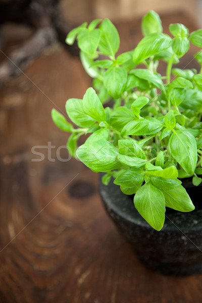 Taze fesleğen ahşap gıda mutfak bitki Stok fotoğraf © mythja