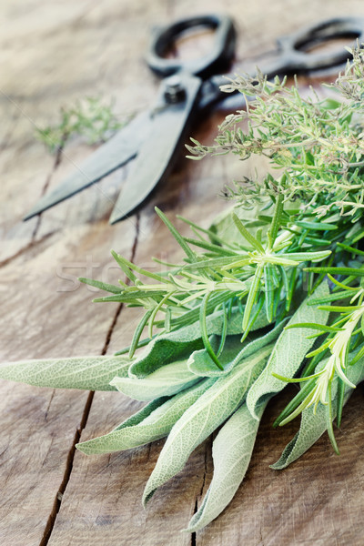 Freshly harvested herbs Stock photo © mythja