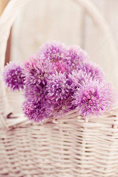 Fresh chives flower Stock photo © mythja
