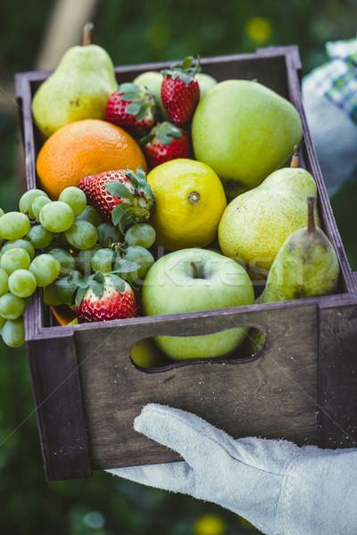 新鮮果物 農家 ボウル 果物 フルーツ バスケット ストックフォト © mythja