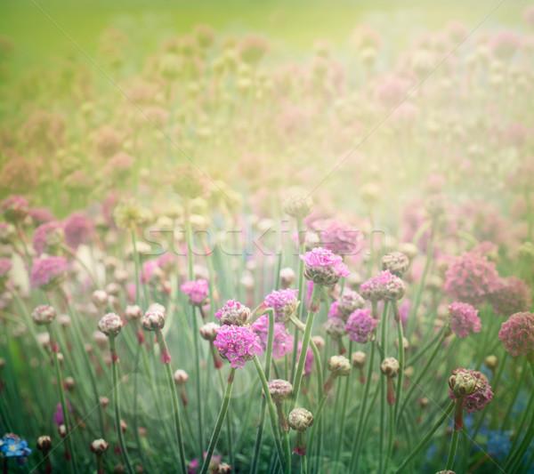 Tavasz virágmintás nyár absztrakt virág terv Stock fotó © mythja