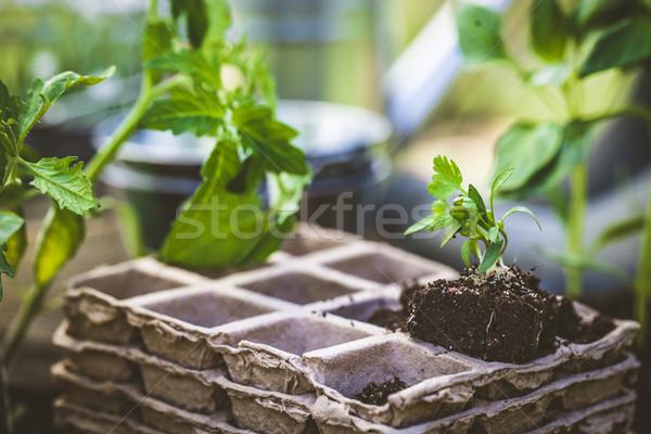 Ogród sadzonka wiosną sadzonki gleby narzędzia Zdjęcia stock © mythja