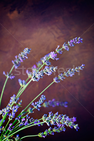 Fresh lavender Stock photo © mythja