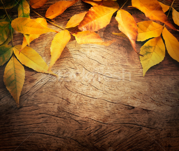 Autumn background Stock photo © mythja