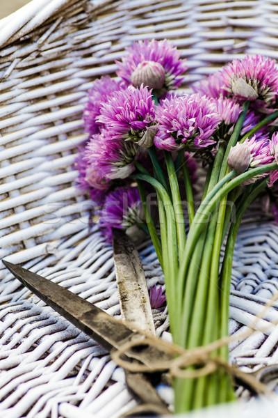 Vers bieslook bloem rustiek voorjaar zomer Stockfoto © mythja