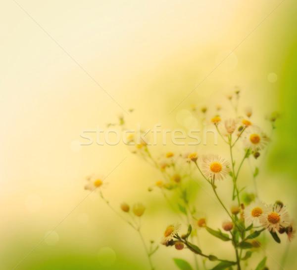 Flores silvestres fresco flores silvestres colorido primavera verão Foto stock © mythja