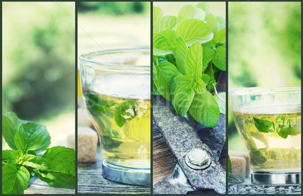 Mint thee collage vers gesneden kruidentuin Stockfoto © mythja