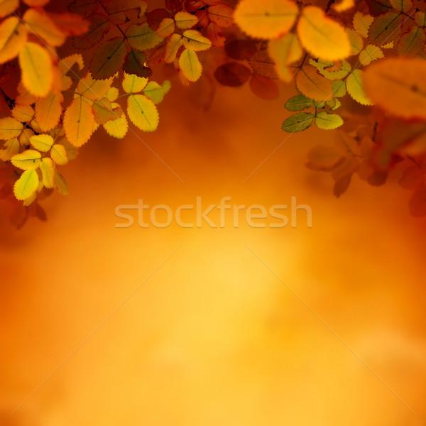 Sonbahar dizayn renkli kırmızı sarı yaprakları Stok fotoğraf © mythja