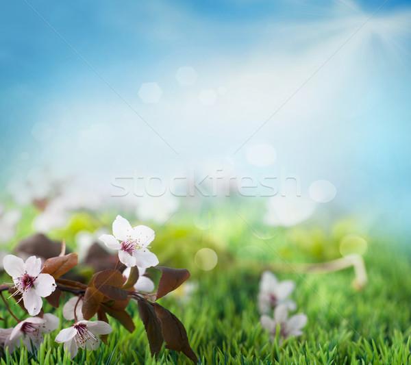 Beautiful floral spring background Stock photo © mythja