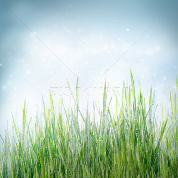 Spring floral background with green grass Stock photo © mythja