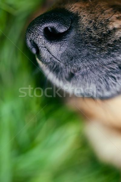 Chien museau animaux nez heureux Photo stock © mythja