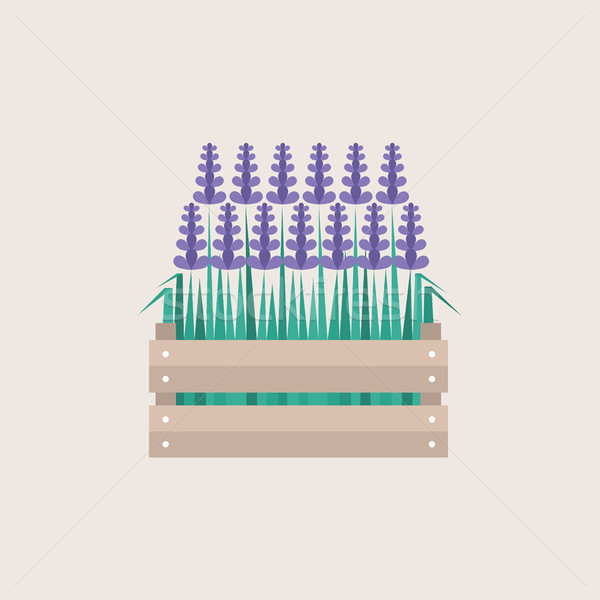 Lavender flowers growing in a wooden crate / flat editable vecto Stock photo © nadia_snopek