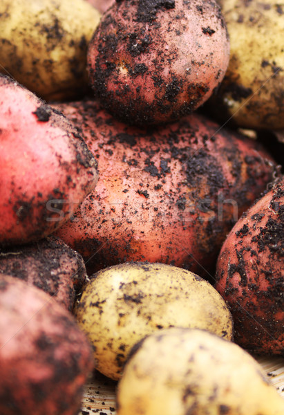 Organic Spuds Stock photo © naffarts