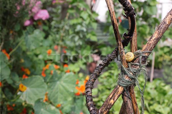 Garden Snail Stock photo © naffarts