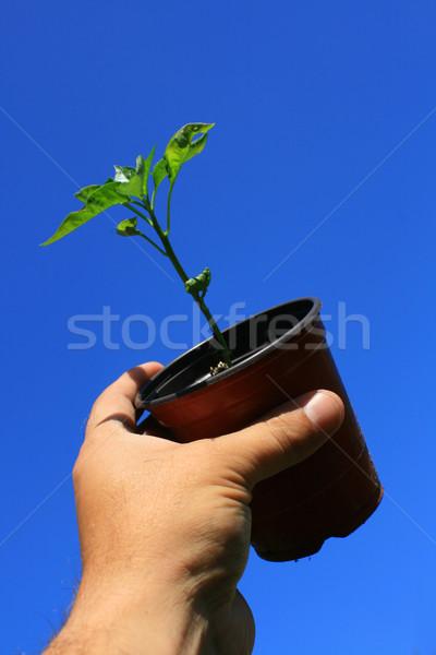 Garden Pot held high Stock photo © naffarts